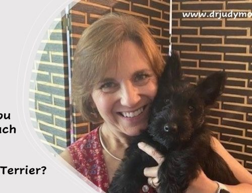 Are You in Touch with Your Inner Terrier?